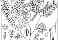 Sketch-of-Red-Bead-Tree