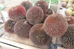 Red-Durian-fruits