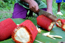Slices-of-Buah-Merah