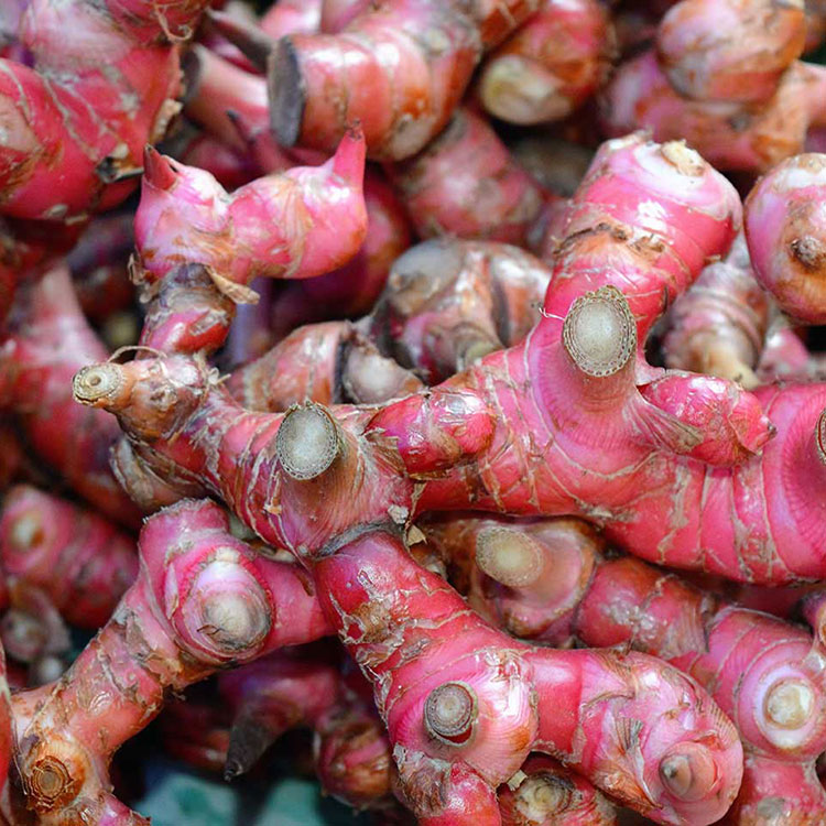Rhizomes-of-Red-Ginger
