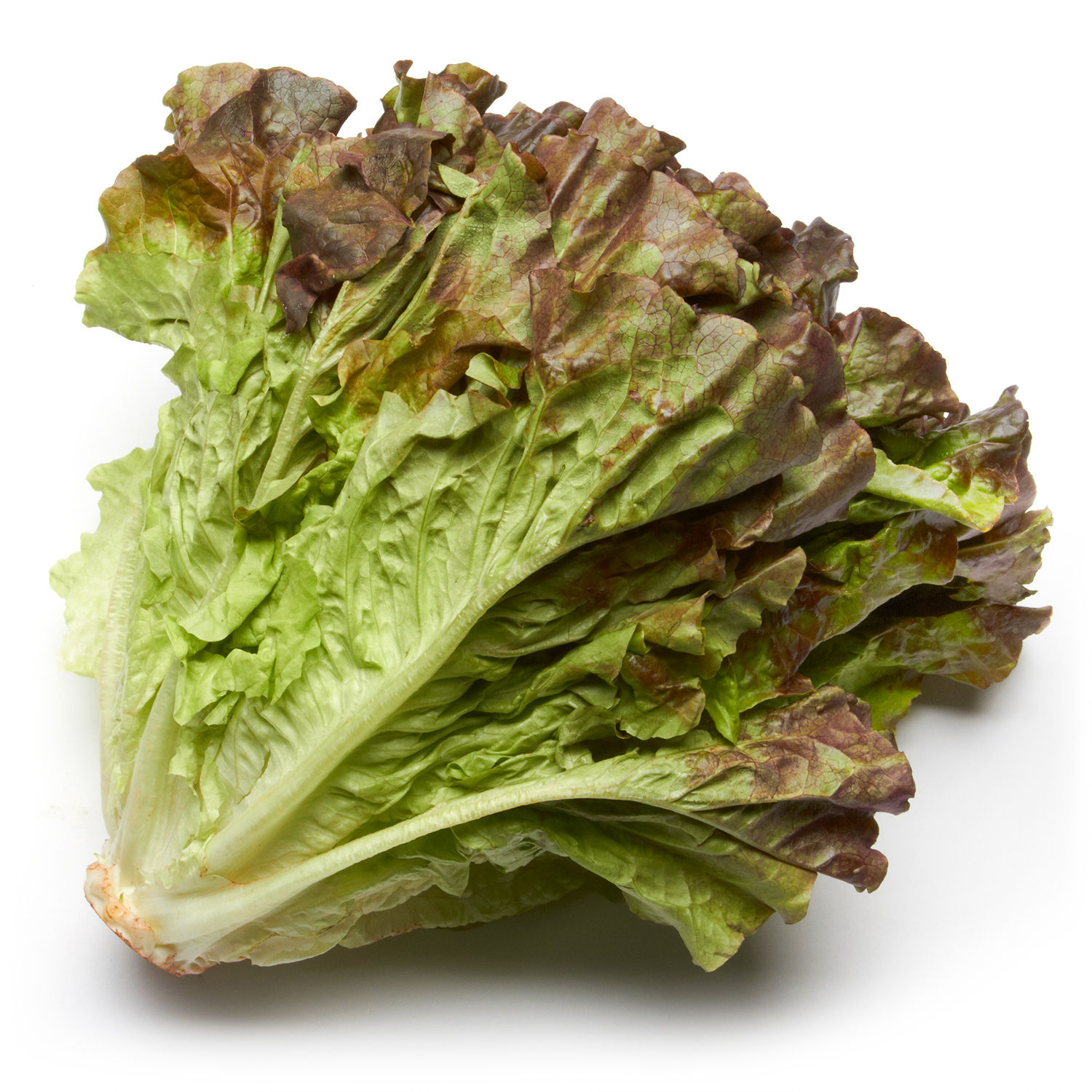 Red Leaf Lettuce, Health Benefits and Nutritional Value