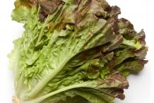 Red-Leaf-lettuce