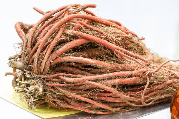 Fresh-roots-of-Red-sage