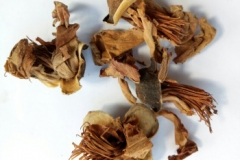 Dried-flower-of-Red-silk-cotton-tree