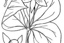 Sketch-of-Red-Trillium