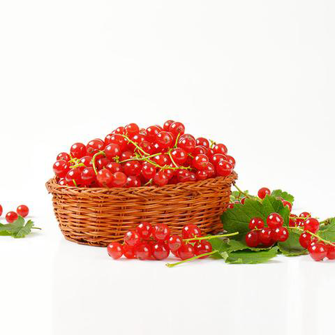 Redcurrants-collected-in-Bucket