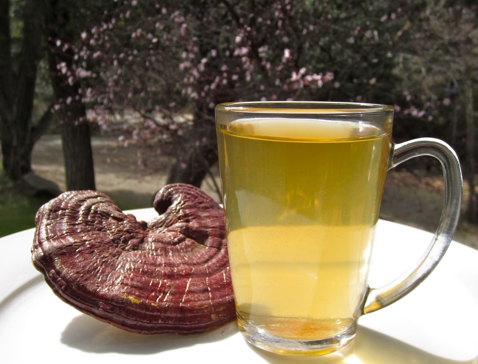 Top Health Benefits Of Reishi Mushroom Hb Times