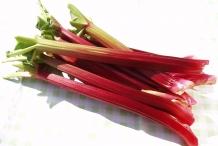 Rhubarb-stalk