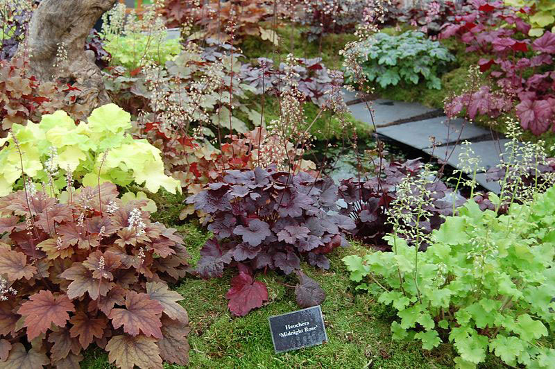 Different-varieties-of-Rock-Geranium