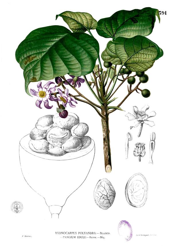 Rowal-fruit-illustration
