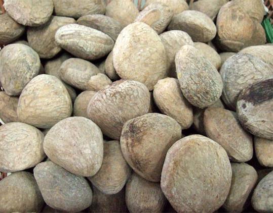 Rowal-fruit-seeds
