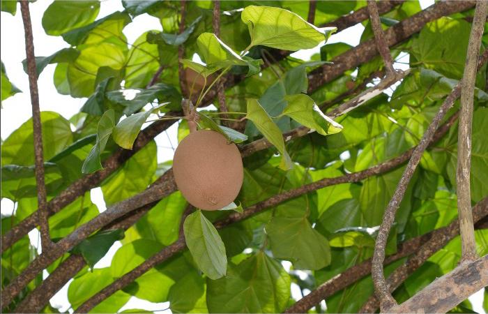 Rowal-fruit