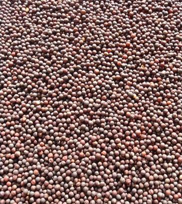 Seeds-of-Rutabaga
