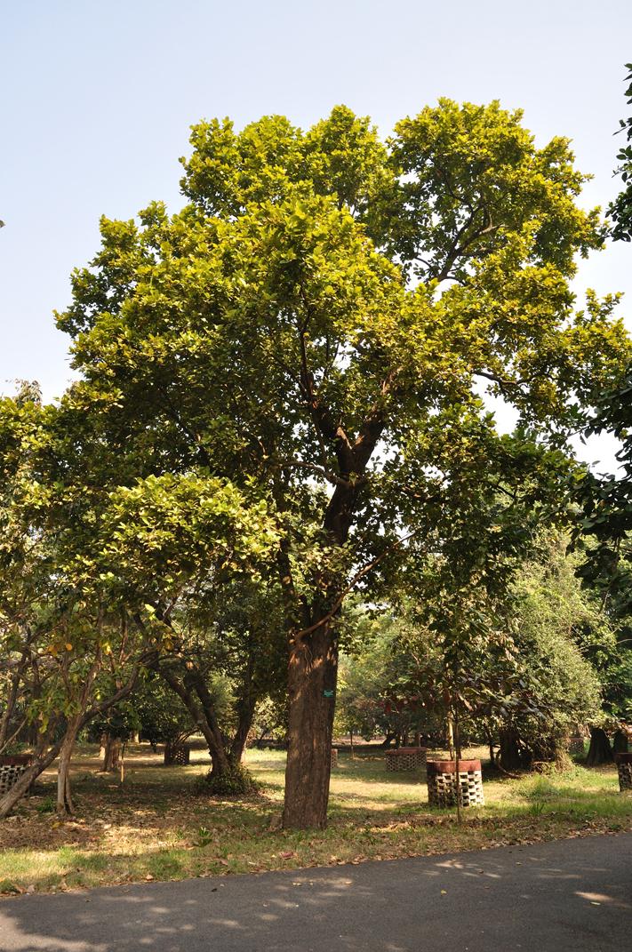 Sal-tree