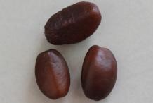 Salak-fruit-seeds
