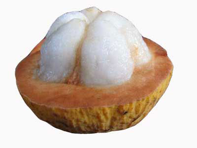Half-cut-Santol-fruit