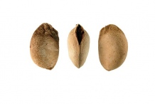 Seeds-of-Santol-fruit