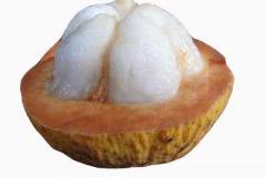 Half-cut-Santol-fruit