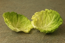 Leaves of Savoy cabbage