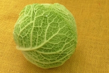 Savoy cabbage head
