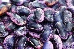 Mature-seeds-of-Scarlet-runner-bean