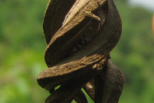 Closer-view-of-Dried-Fruit