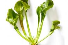 Harvested--Sea-beet--plant