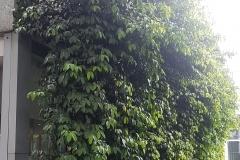 Seashore-Mangosteen-plantation
