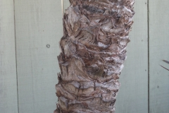 Senegal-Date-Palm-bark