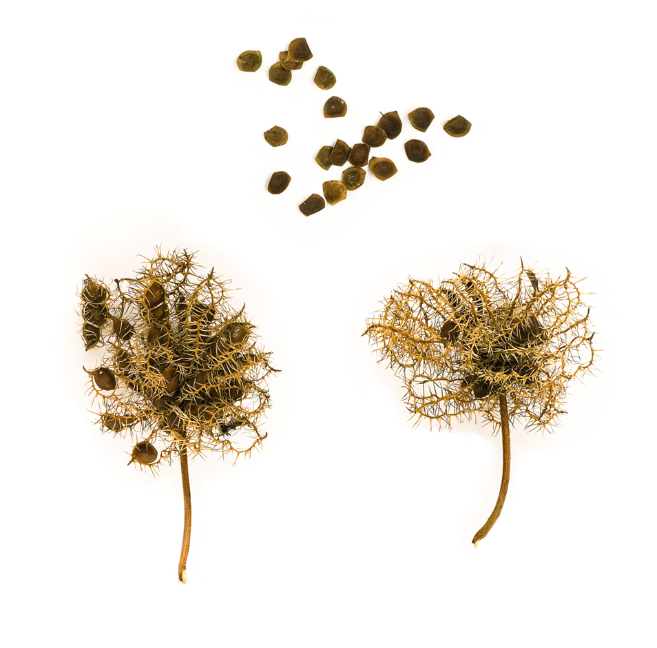 Dried-fruit-and-seeds