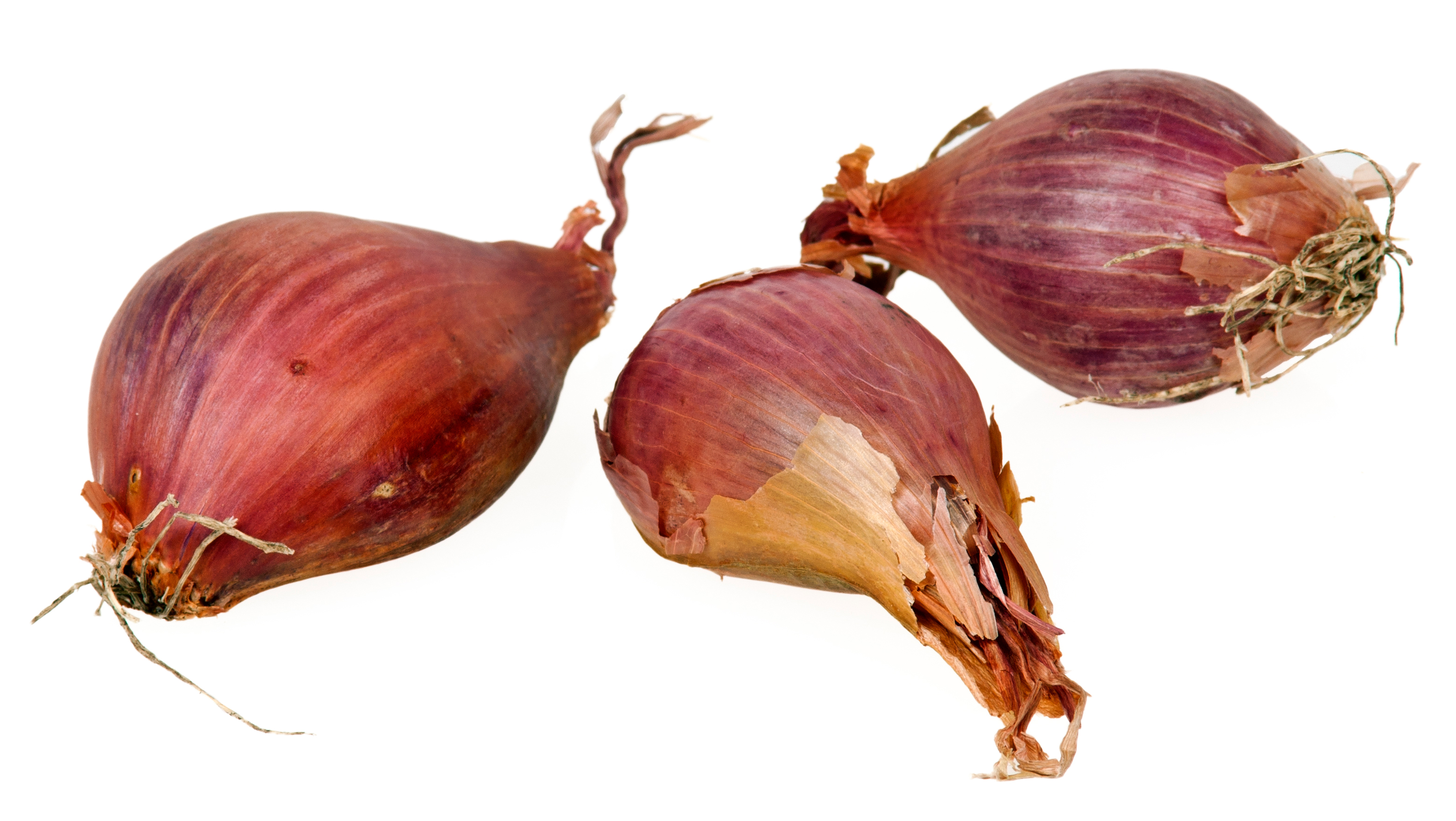 shallots facts and health benefits