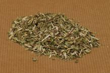 Dried-Skullcap-plant