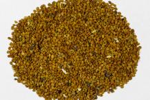 Skullcap-Seeds