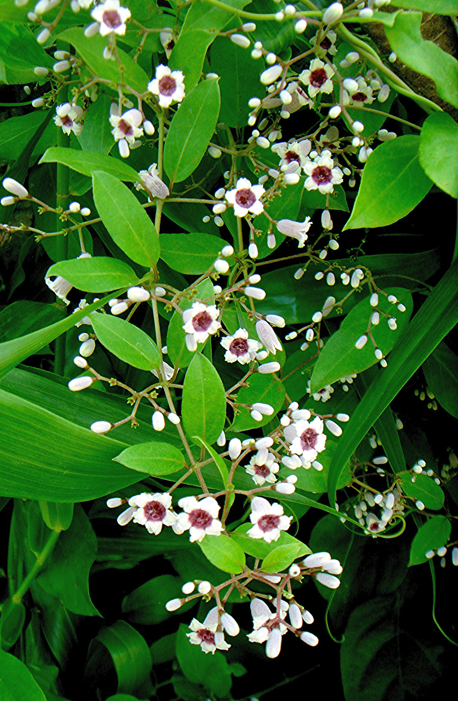 Plant-with-blossoms