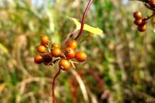 Ripe-fruits