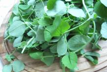 Leaves-of-Snow-Peas
