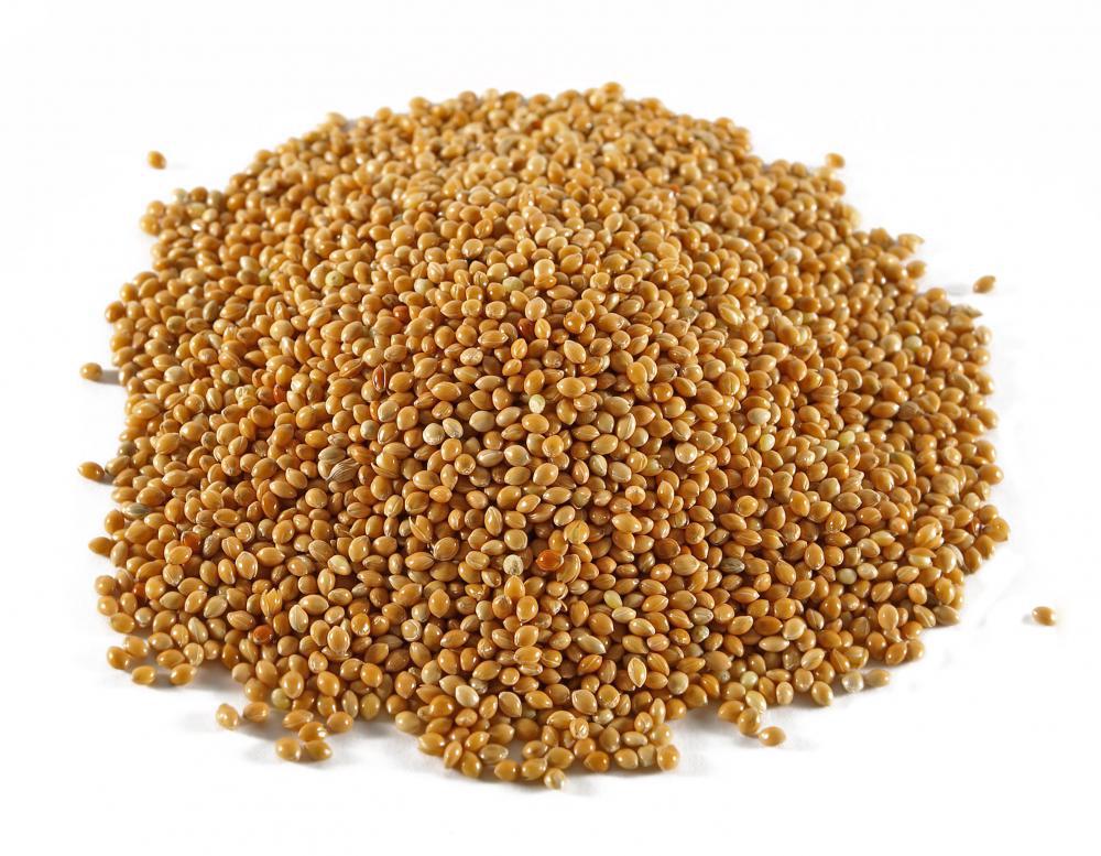 Sorghum-seeds