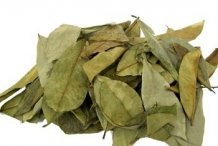 Soursop-leaves-dried
