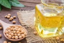 Soybean-oil-Phaseolus max
