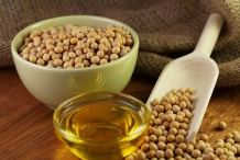 Soybean-oil-Glycine gracilis