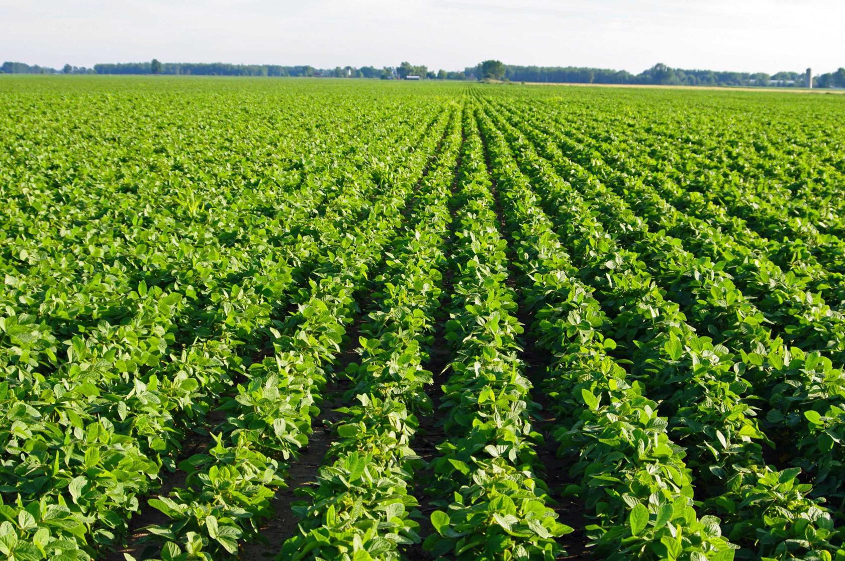 Farm-of-Soybean
