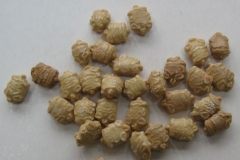 Seeds-of-Spiny-Gourd