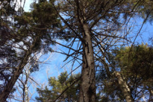 Spruce-Plant