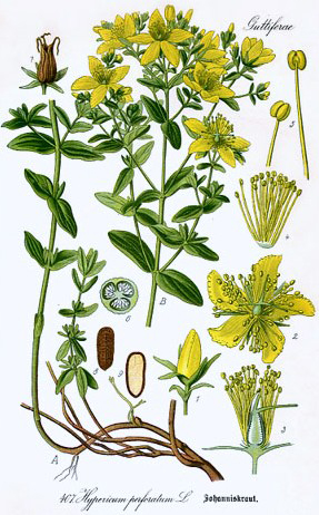 St John S Wort Facts And Health Benefits