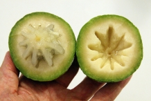 Star-apple-green-Abiaba