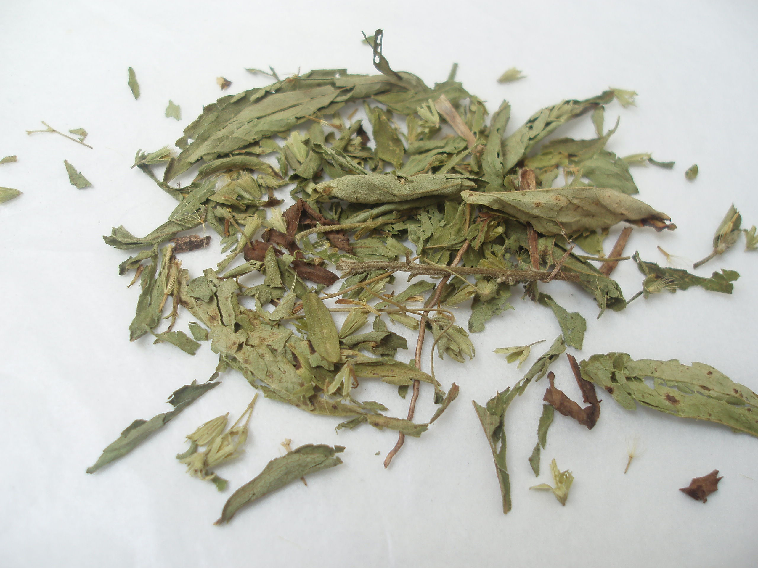 Dried-leaves-of-Stevia