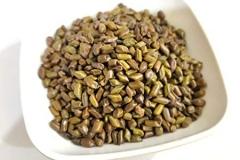 Seeds-of-Stinking-Cassia