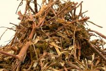 Dried-stone-breaker-herb
