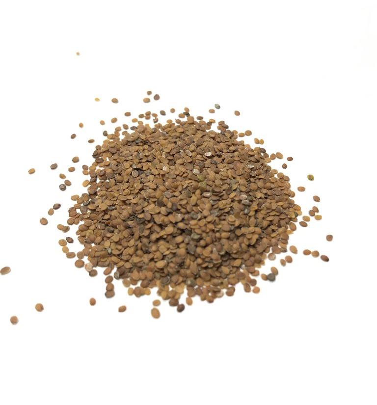 Sweet-Alyssum-seeds