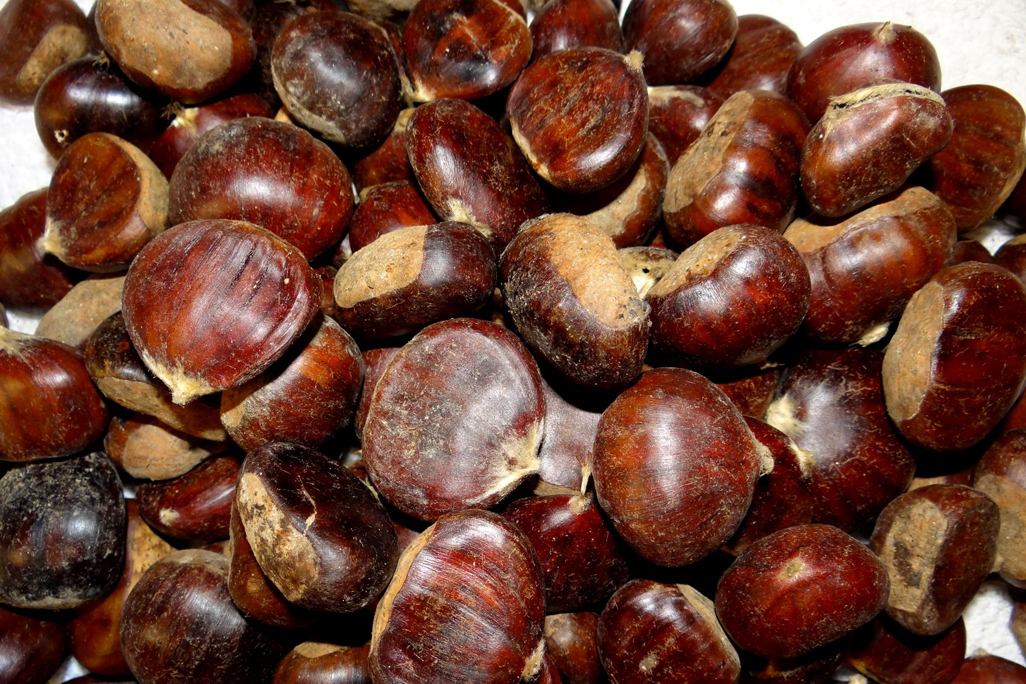 Nuts-of-Sweet-chestnut